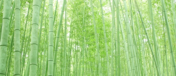 ニチベイ バンブーブラインド 竹製ブラインド ポポラ 竹の香り