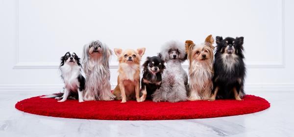 第10回インターペット ペット産業国際見本市 人とペットのより良いライフスタイル 東京ビッグサイト開催予定